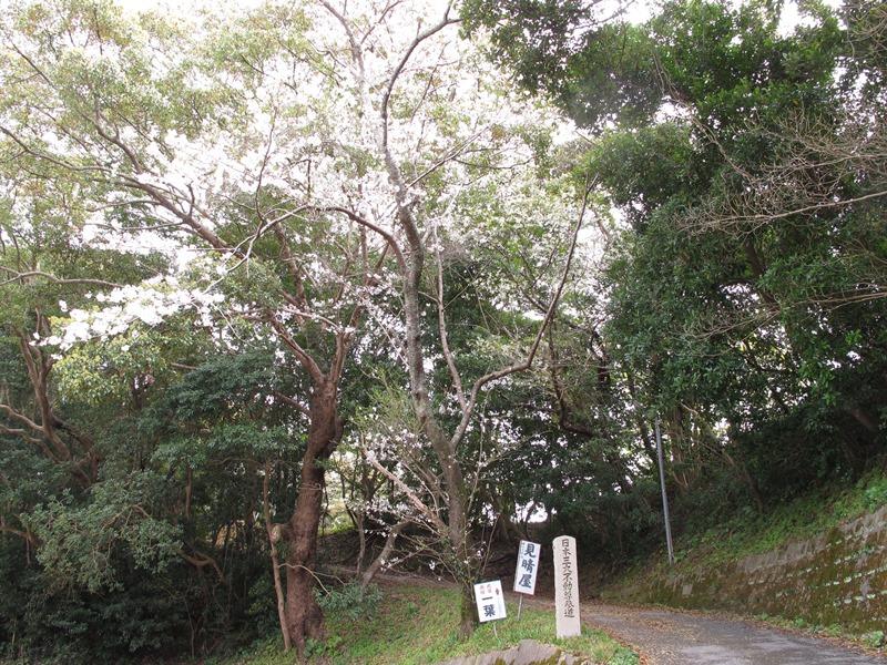 fudouson-sakura_20160402_01