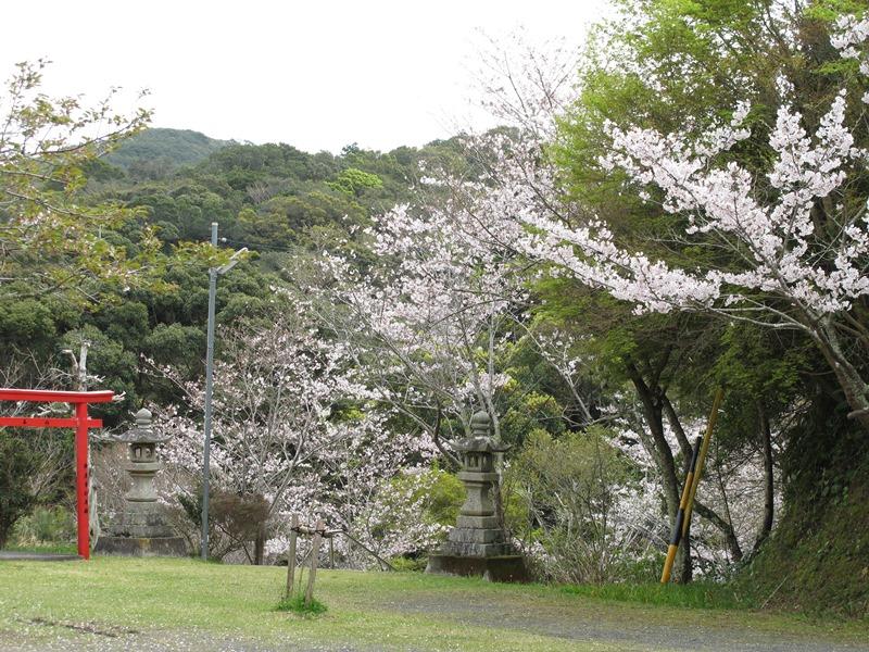 fudouson-sakura_20160402_02