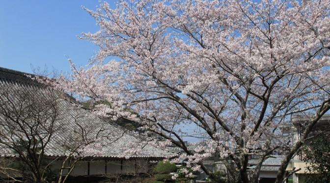 毎年3月下旬からは、御座の桜の見頃を迎えます。