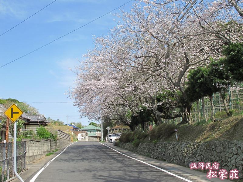旧御座小学校裏門の桜並木